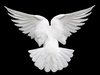 Dove of light and love