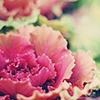 a Lovely Flower