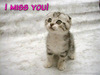 missing you as my pet