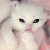 •~•kawaii kitty•~•