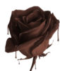 chocolate rose