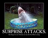 Shark Attack!