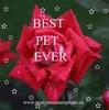 Best Pet Award
