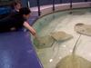 a trip to pet stingrays.
