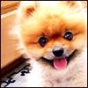 ♥ i'm a happy pet ♥
