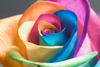 Multicoloured Rose Delight