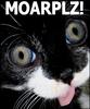 MOARPLZ!