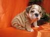 Puppy~Dog ~ღ~
