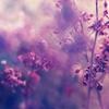 ** Garden Of Dreams **