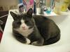 Happy in the sink