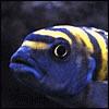 need a fish