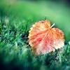 our autumn's love
