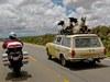 Road trip, llama style!