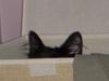 Crouching Puma, Hidden Kitten...