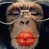 kiss my monkey