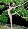 natural dance